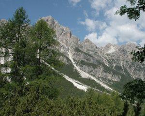 WEBGIS DELLE FORESTE